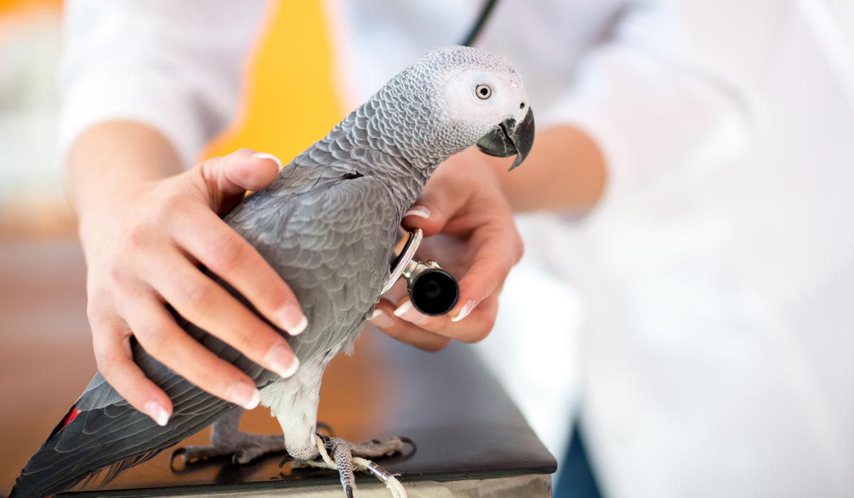 axiliar-veterinaria-zoologicos